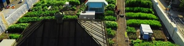 Il mio orto sul terrazzo