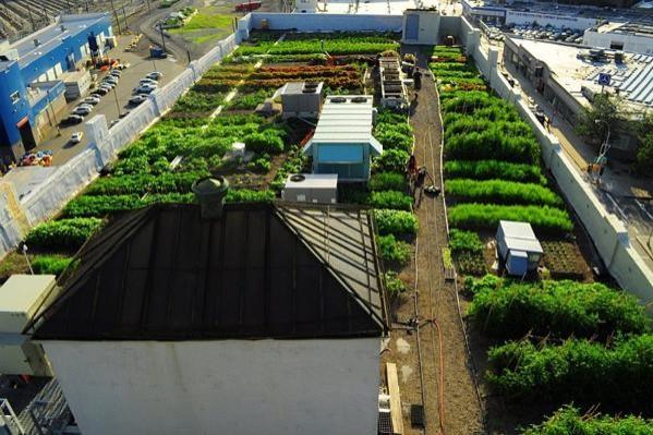 orto sul tetto