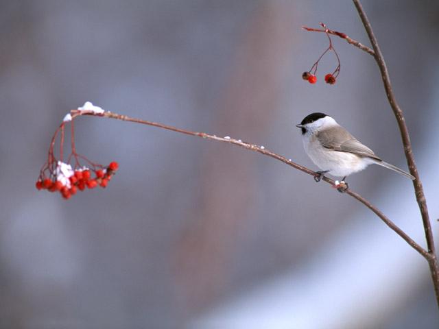 uccellino in inverno