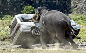 attacco-elefante