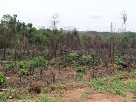 Nelle foreste del Chaco paraguaiano la più alta devastazione al mondo