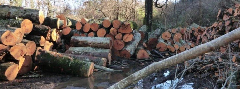 Continua indisturbato il disboscamento sul Lago di Vico