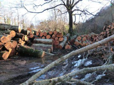 Piano di assestamento forestale per la selva Cimina… ma serve realmente!?