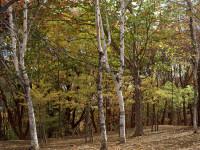 """Se aumenta la temperatura della Terra gli alberi diventano """"migranti"""""""