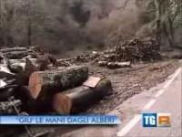 """TGR Lazio (RAI3) – """"Giù le mani dagli alberi"""""""