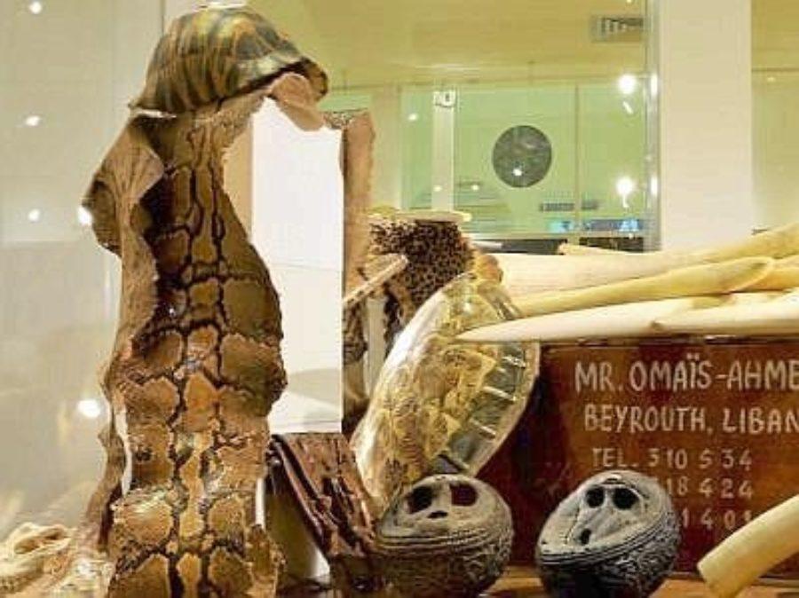 Inaugurato a Roma il Museo dei crimini ambientali