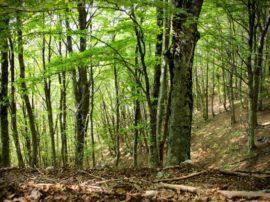 A quanto ammonta la copertura forestale in Italia?