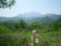 Il Consiglio di Stato riconosce il paesaggio come bene primario assoluto, prevalente rispetto a qualunque altro interesse