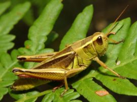 Secondo la FAO per sconfiggere la fame nel mondo la risposta sta negli insetti
