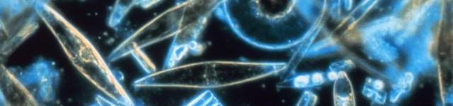 """Allarme fitoplancton, sta """"scomparendo"""" da tutti i mari"""