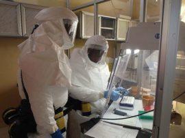 """Ebola """"programmata"""" rappresenta una nuova minaccia per l'umanità?"""
