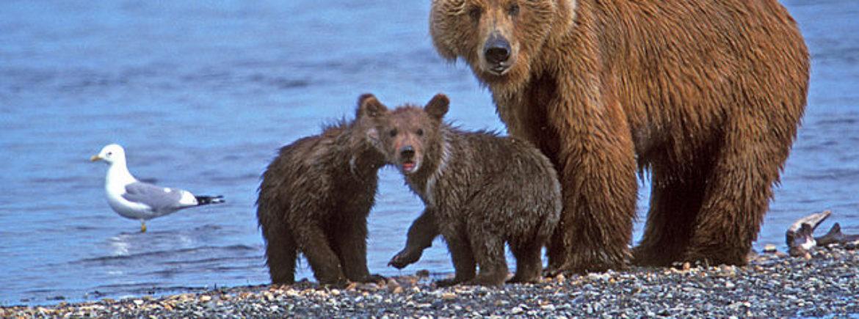 """Caccia alle """"streghe"""", ovvero agli orsi!"""