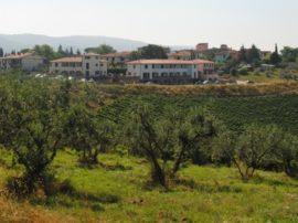 Ora abbiamo qualche certezza in più: l'olio extra vergine di oliva previene i tumori