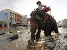 """Un """"Diluvio Universale"""" sulla Malesia e sulla Thailandia"""