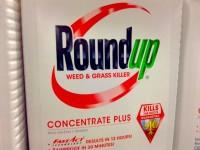 L'Olanda dice no a Monsanto e mette al bando l'erbicida Roundup