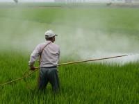 Glifosato, rinnovo per altri 15 anni dell'erbicida Monsanto?