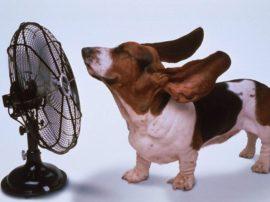 Consigli per combattere il caldo