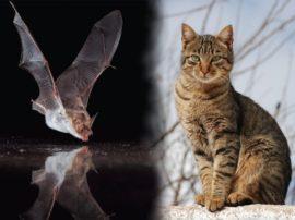 """Pipistrelli e gatti assunti come """"disinfestatori"""" naturali"""