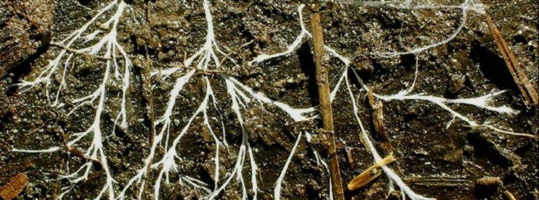 Funghi e bioindicazione (prima parte)
