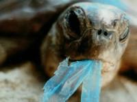 Scoperto nel Tirreno il vortice assassino della plastica… è letale anche per l'uomo