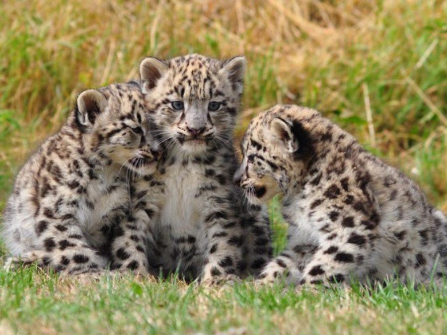 Le curiosità del mondo animale (indice)