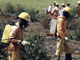 Terreni sani e api da salvare