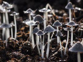 Funghi e bioindicazione (nona parte)