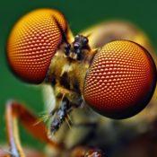 L'occhio composto degli insetti (SPECIALE)