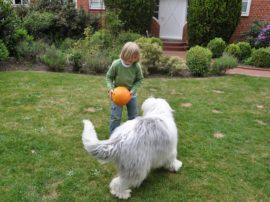 Avere un cane diminuisce il rischio di soffrire d'asma