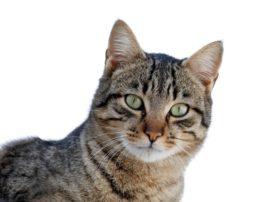 """Pare che i gatti siano dei """"guaritori"""""""