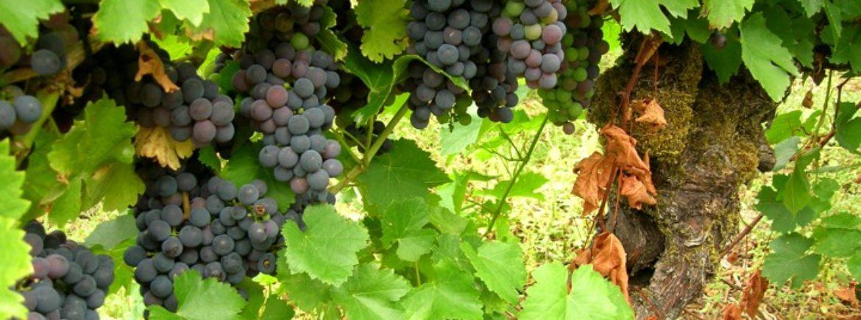 Un esempio di efficienza nel riciclio dell'Industria Vinicola