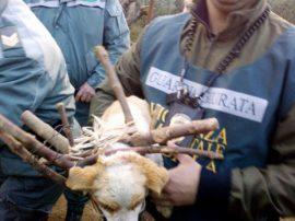 Salvati due cuccioli di cane dal maltrattamento umano