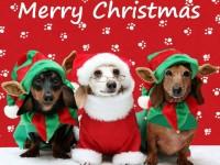 Auguri di un felice e sereno Natale da Accademia Kronos