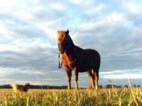 Corso per operatore equestre in ippoterapia