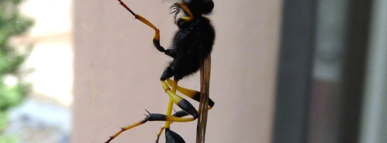 La vespa vasaio
