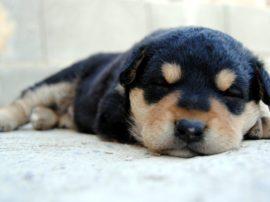 Il sonno… un processo indispensabile per tutti gli animali (SPECIALE)