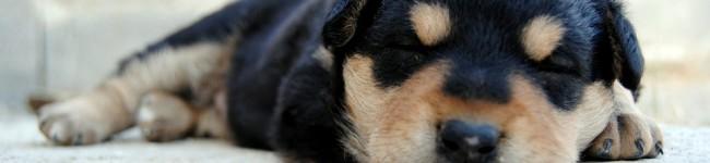 Il sonno… un processo indispensabile per tutti gli animali