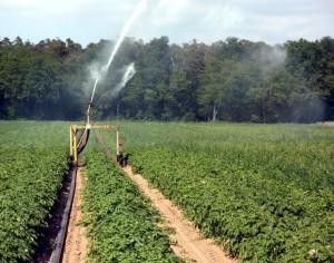 L'inutile spreco d'acqua in agricoltura