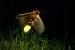 La lucciola, luce ad altissima efficienza energetica
