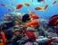 La tropicalizzazione dei mari tocca anche il Mediterraneo