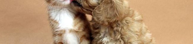 Un amico a 4 zampe, cane o gatto che sia, allunga la vita
