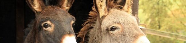 Accademia Kronos in soccorso degli animali abbandonati dopo i recenti terremoti dell'Italia centrale
