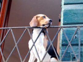 È legge: i condomini non possono vietare gli animali
