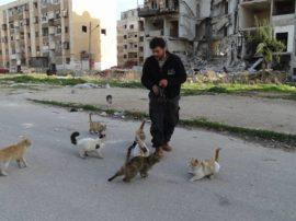 Mohammad, l'uomo che sotto le bombe aiuta i gatti di Aleppo