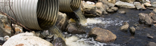 """I pesci si stanno """"evolvendo"""" per sopravvivere nelle acque inquinate"""