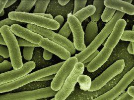 Da un batterio nascono componenti per elettronica e farmaci