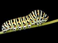 La metamorfosi negli insetti