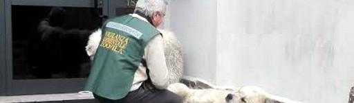 """Intervengono le guardie zoofilo-ambientali di AK per due cani """"aggressivi"""" (Albano Laziale)"""
