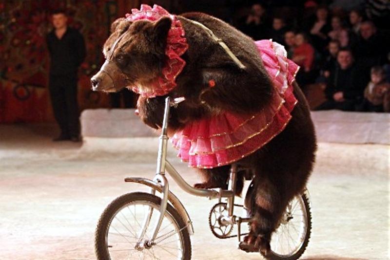 animale al circo