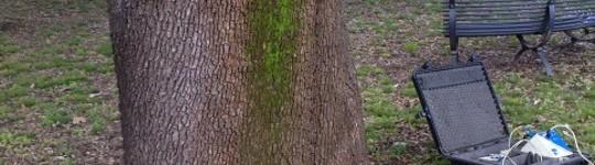 Il Tomografo sonico ad impulsi: una TAC per gli alberi